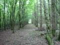 Cilibion-Wood-Sep-2008-036