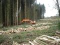 Spruce clearfell._s